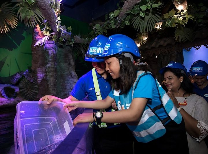 SEA LIFE Malaysia Welcomes First Group of Fish, Opens in April 2019