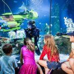 SEA LIFE Malaysia - Aquarium